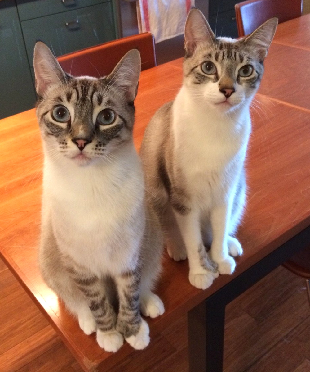 Toretto and Hobbs are super curious!