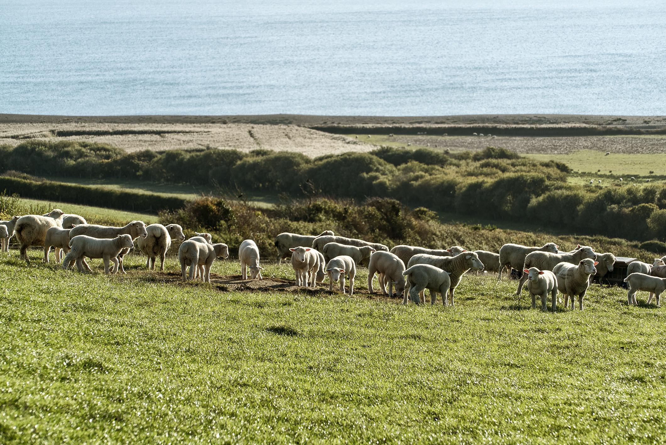 lamb_05w.jpg