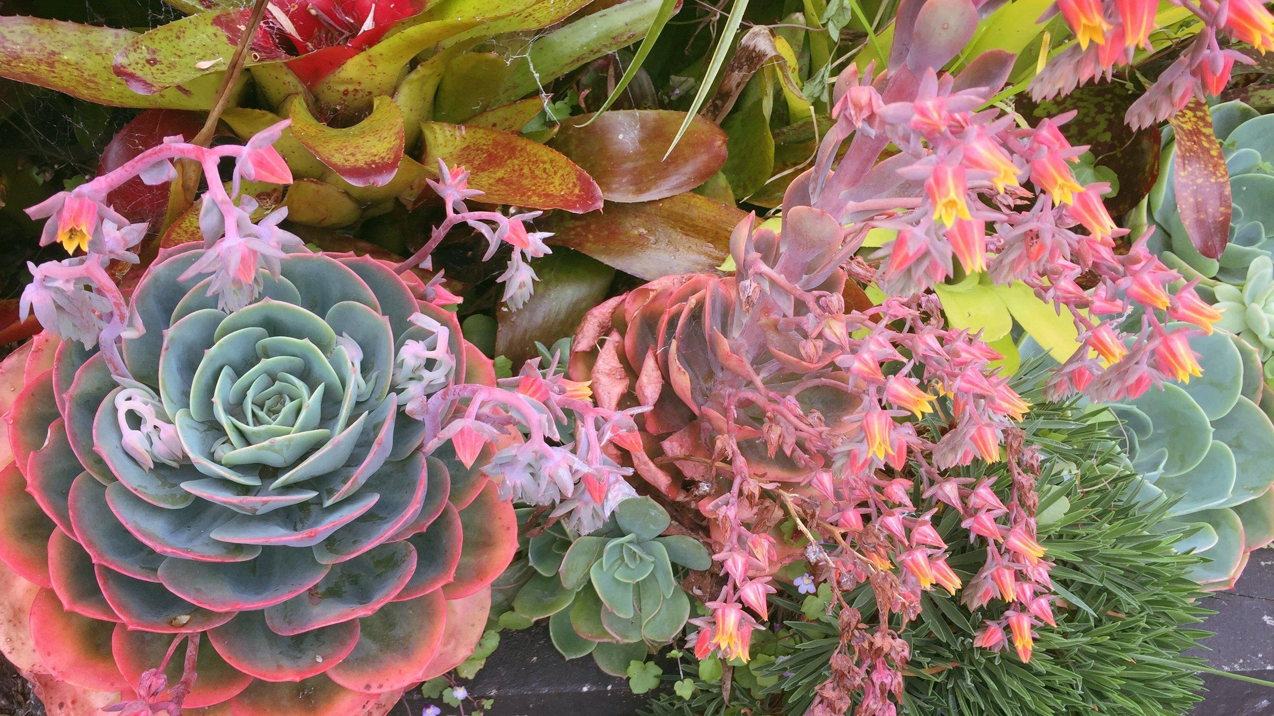 Yoga & Social - succulents