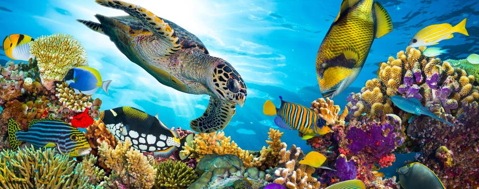 baltimore-national-aquarium-at-maryland-th.jpg