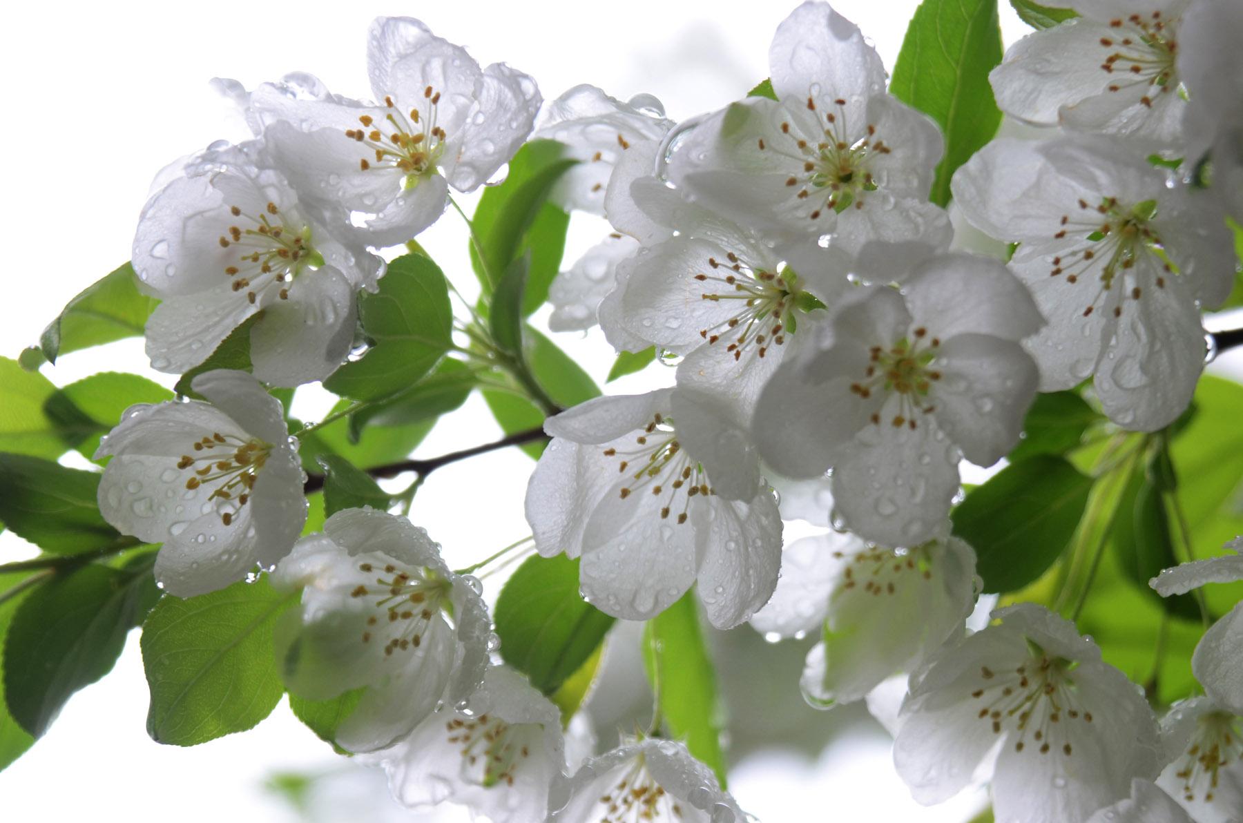 Flowersw.jpg