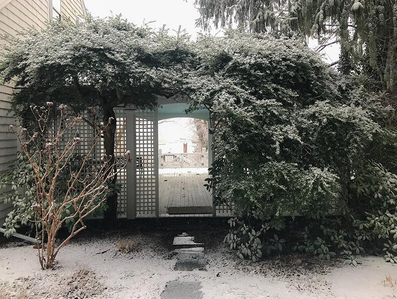 Vineyard Garden... winter aspect