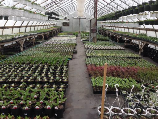 VG2 growing greenhouse