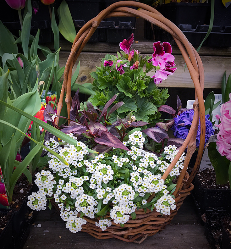 Flowering Basket for Mother's Day
