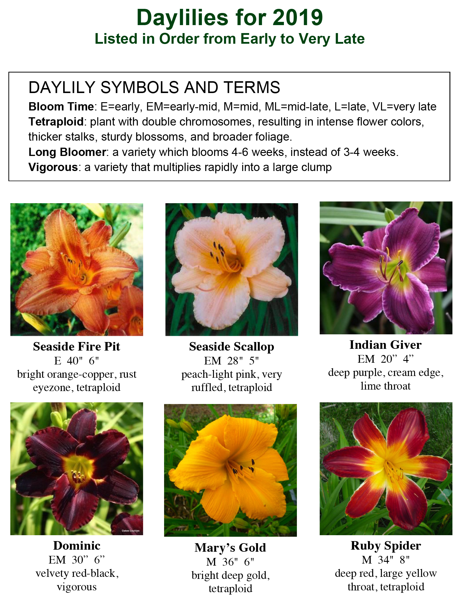 Daylily photos 2019 VG-1.jpg