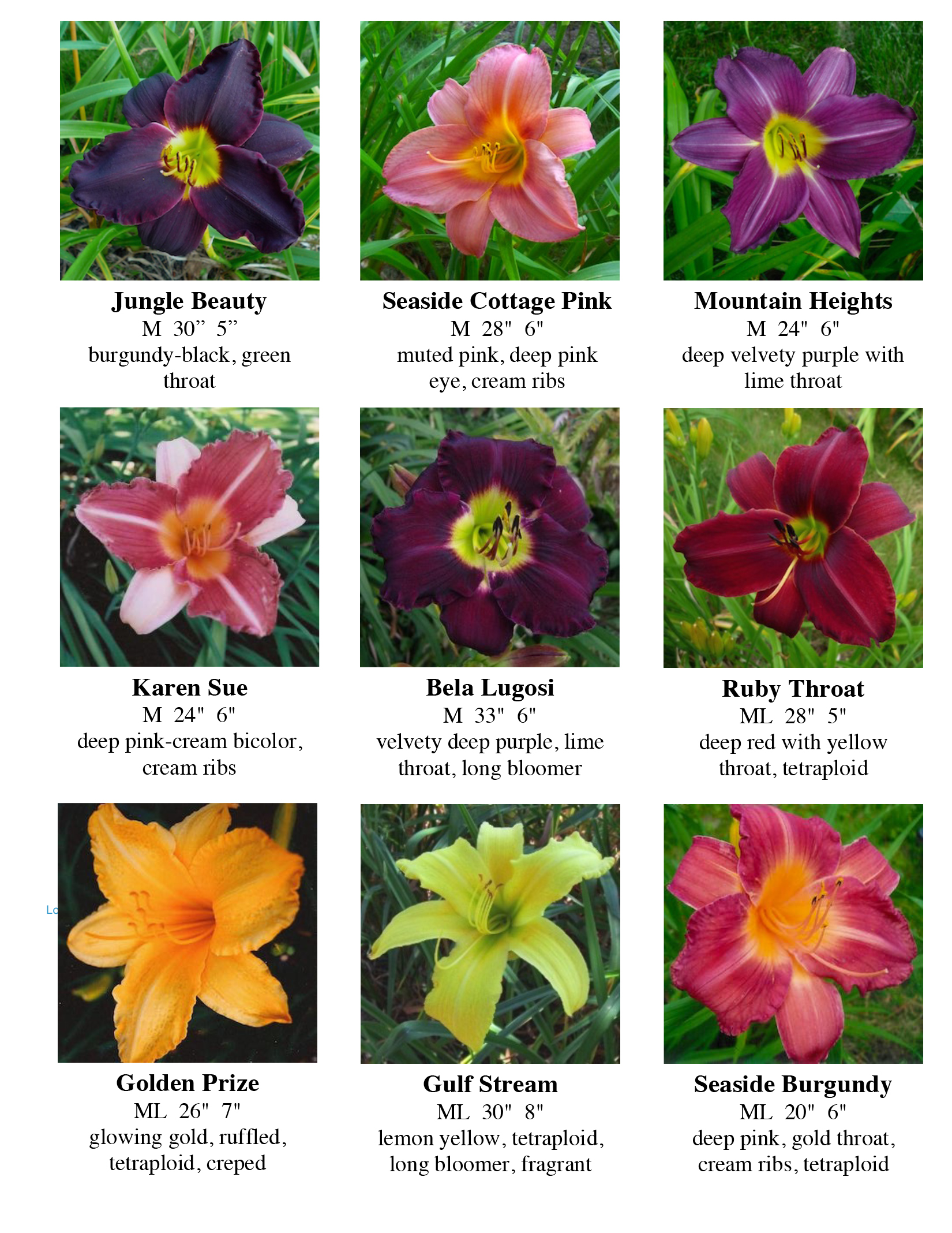 Daylily photos 2019 VG-2.jpg
