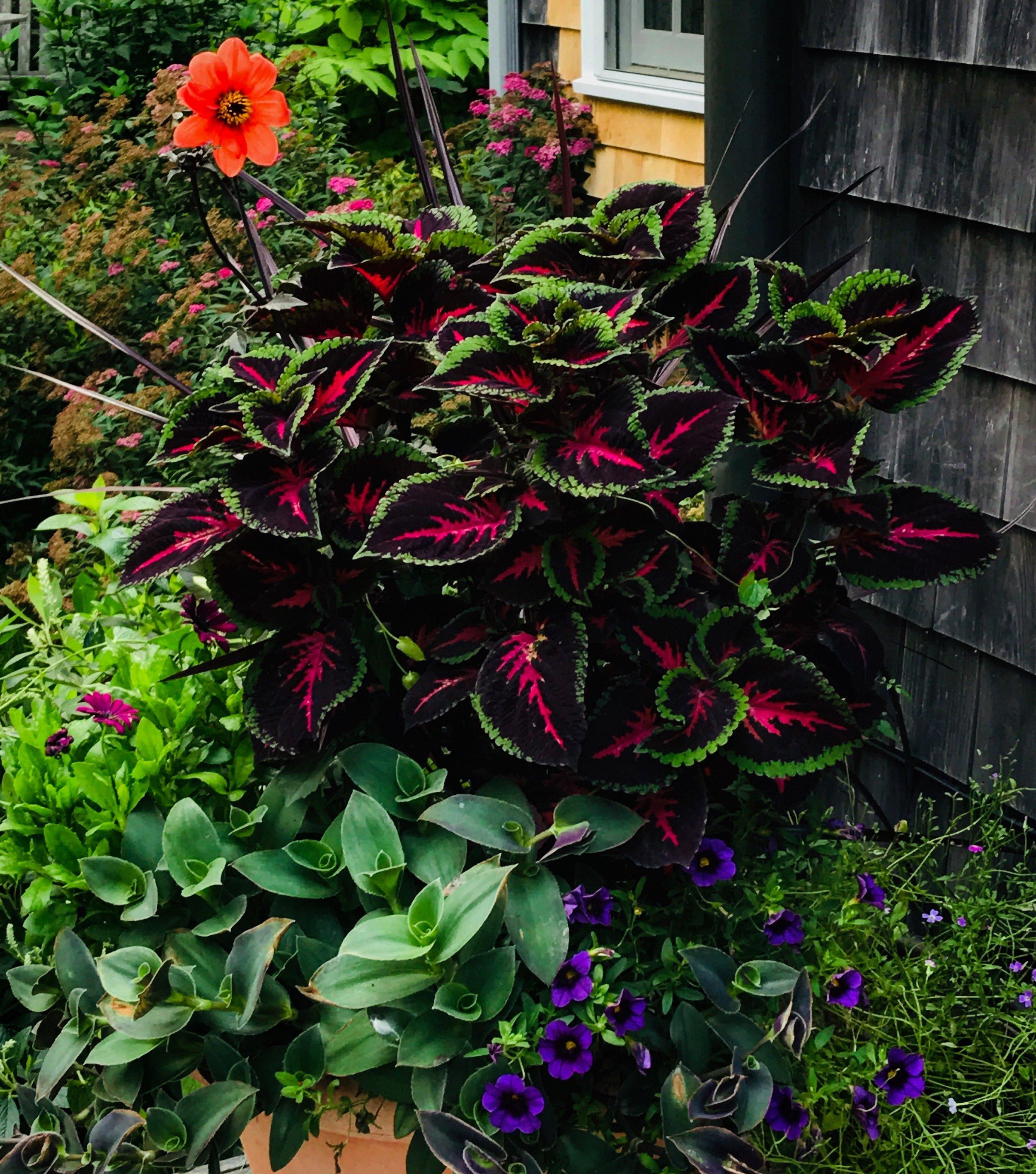 mixed planters