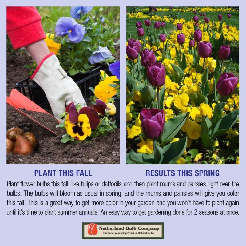 1_plant this fall.jpg
