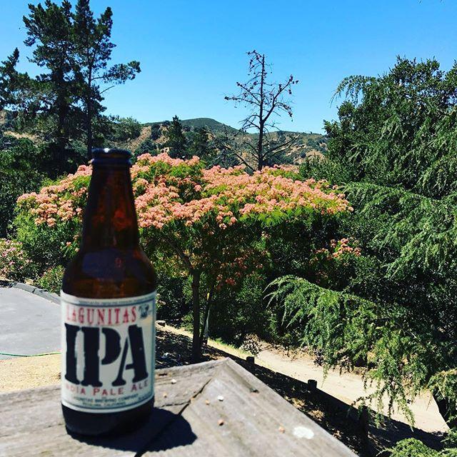 Weekend Vibes😎Beautiful weather in California! #beer #brewinsure #brewery #california @lagunitasbeer