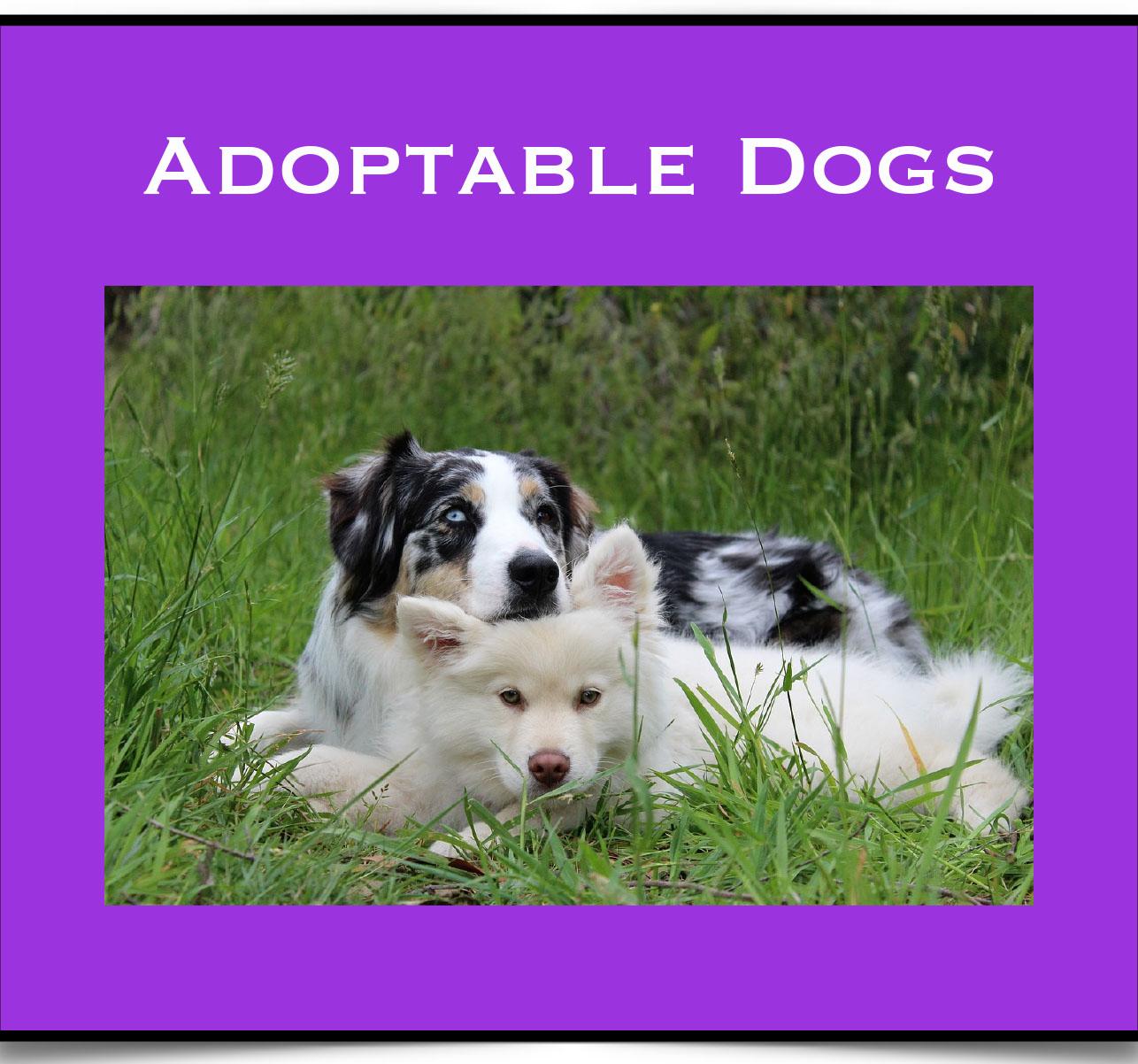 Adopt Dogs.jpg