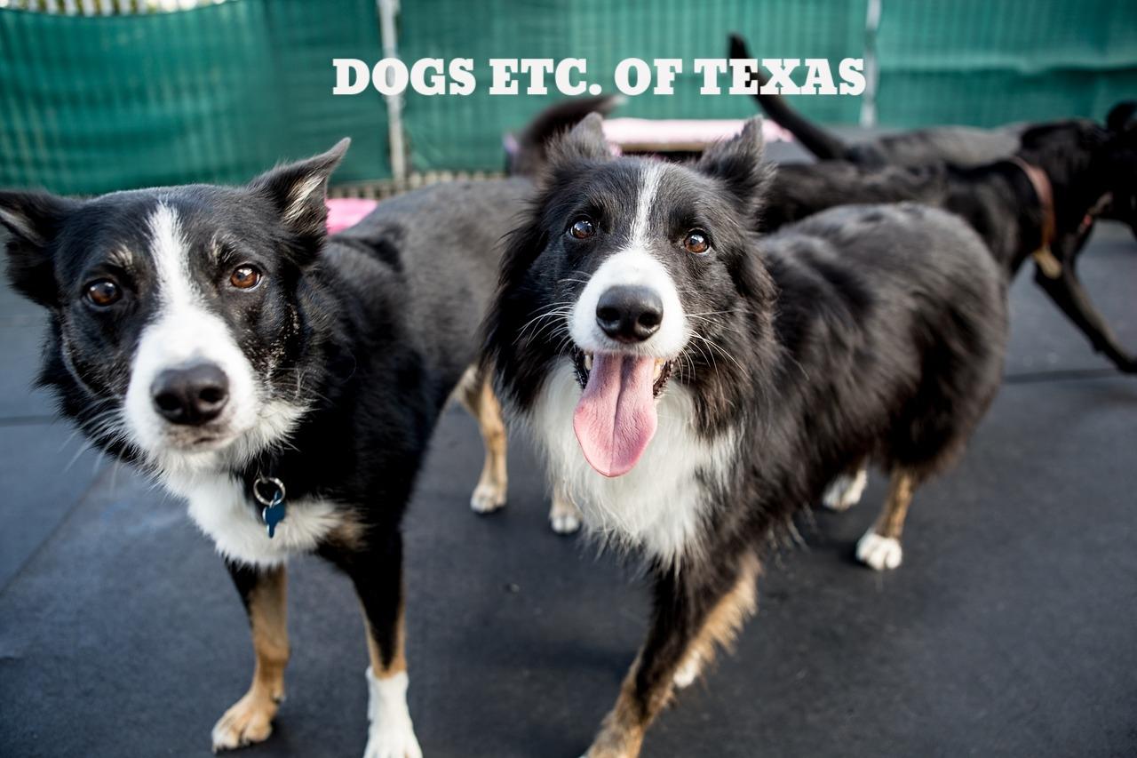 dogs-1752895_1280.jpg
