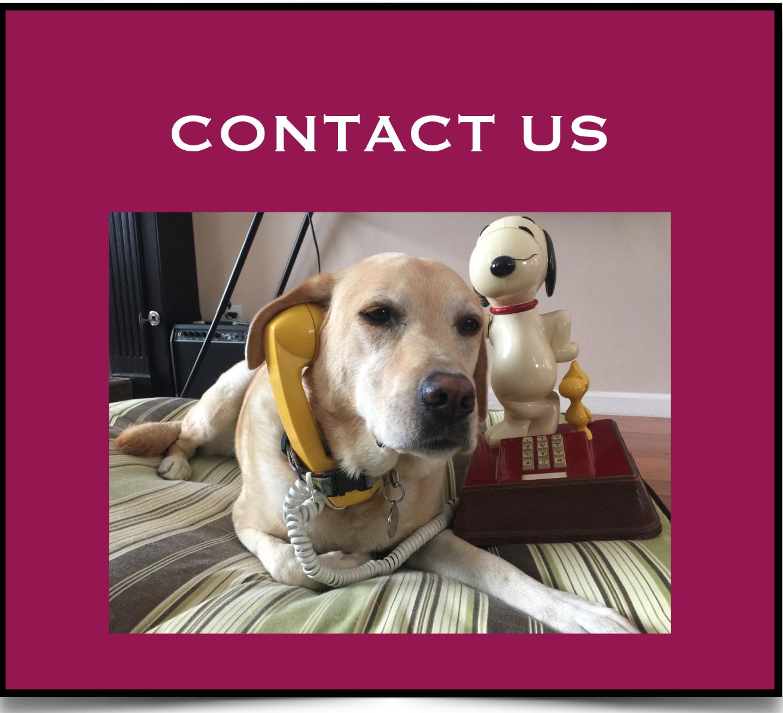 Adopt Dogs copy.jpg