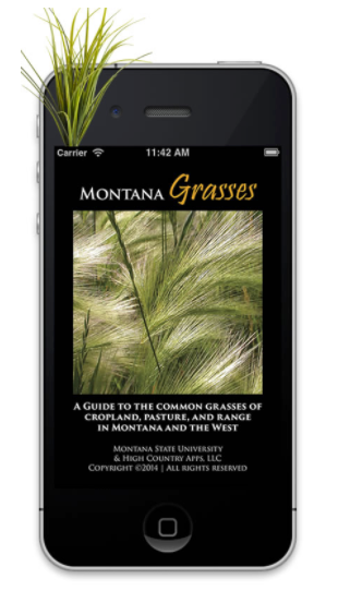 MONTANA GRASSES | A guide to the common grasses of cropland, pasture, and range in montana and the west.