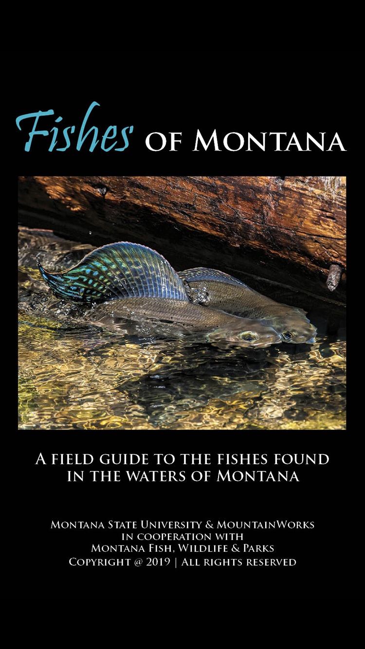 Fishes of Montana  A guide to the more than 90 species of fish found in Montana.
