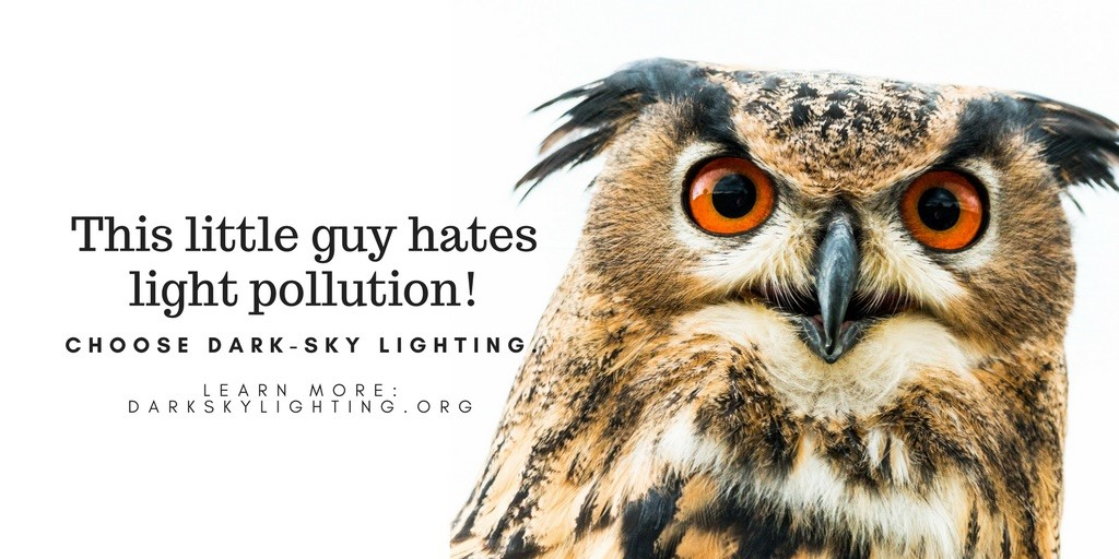 Owls Hate Light Pollution!