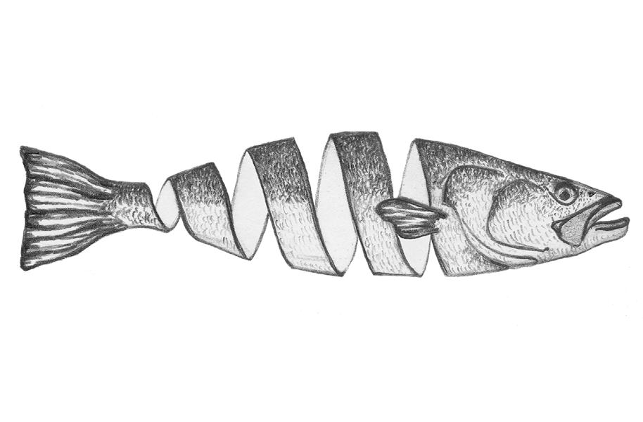 FnT_Illo-FishCurl.png