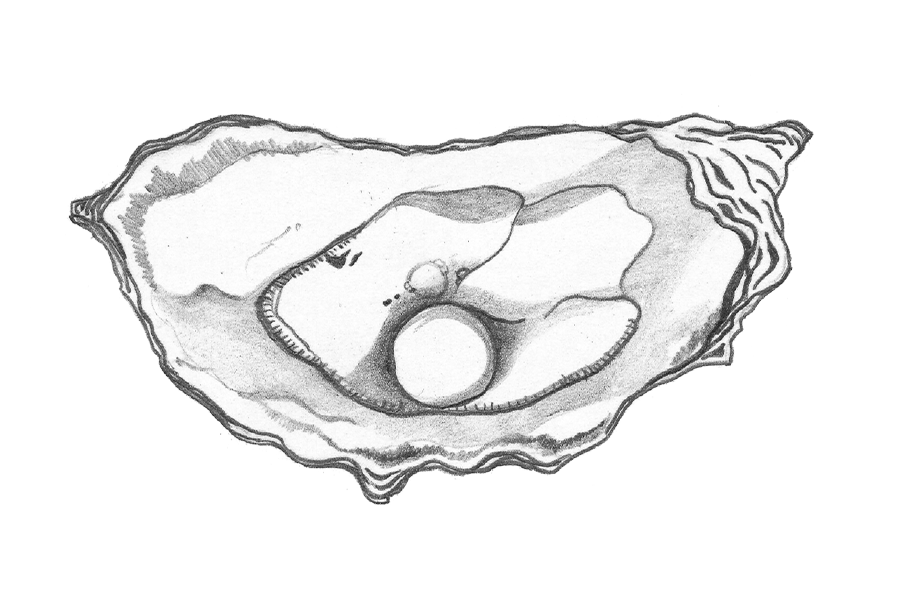 FnT_Illo-Oyster.png