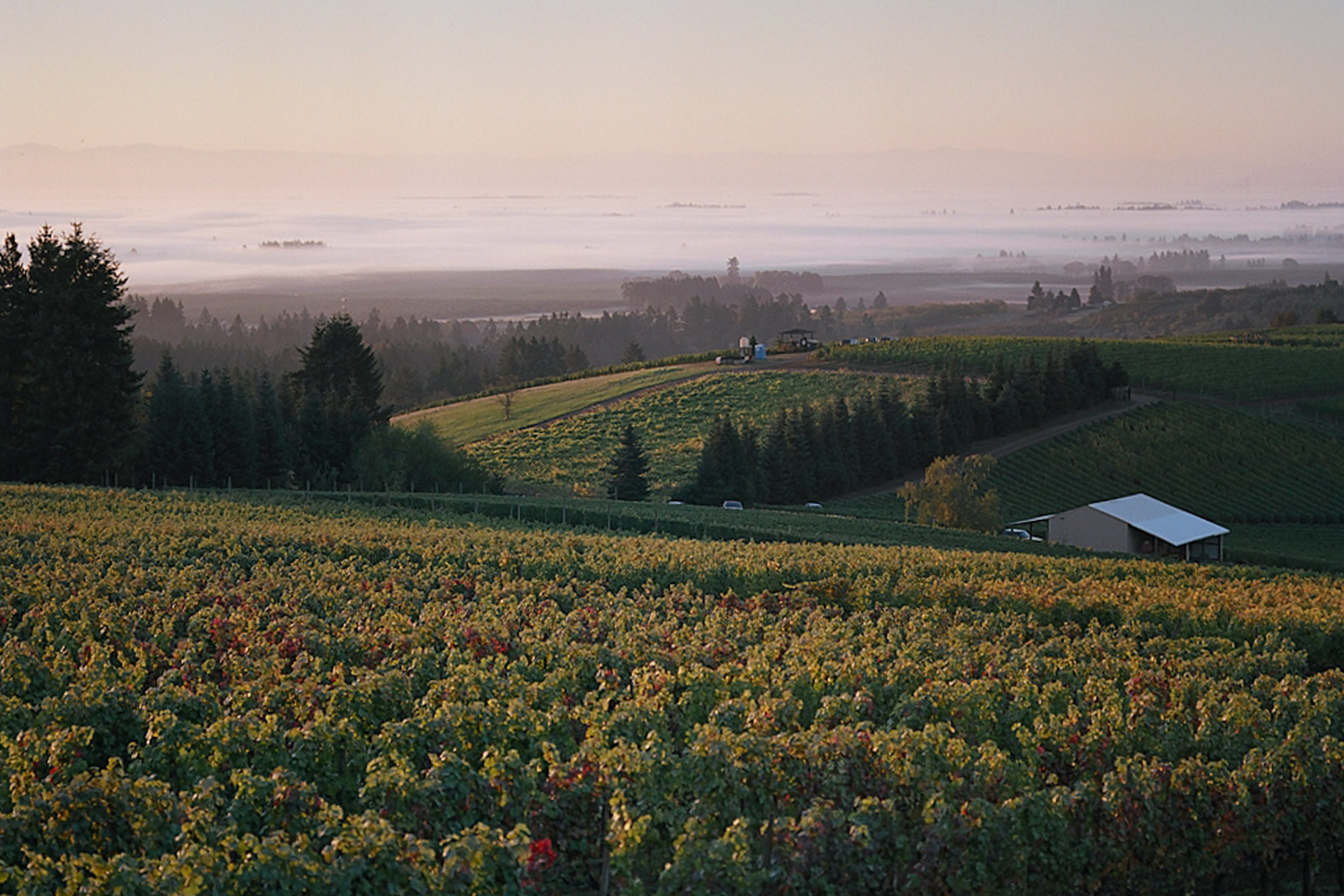 Willamette-Winderlea-Vineyard 2.jpg