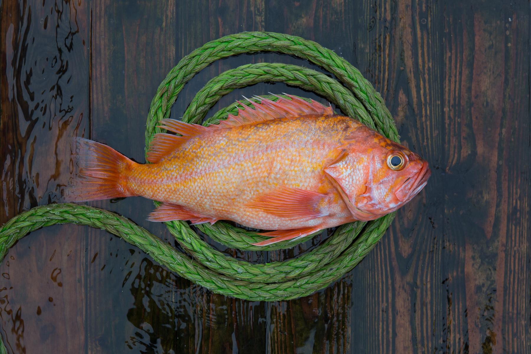 1709-Ocean Hunter Fish & Rope-14.jpg