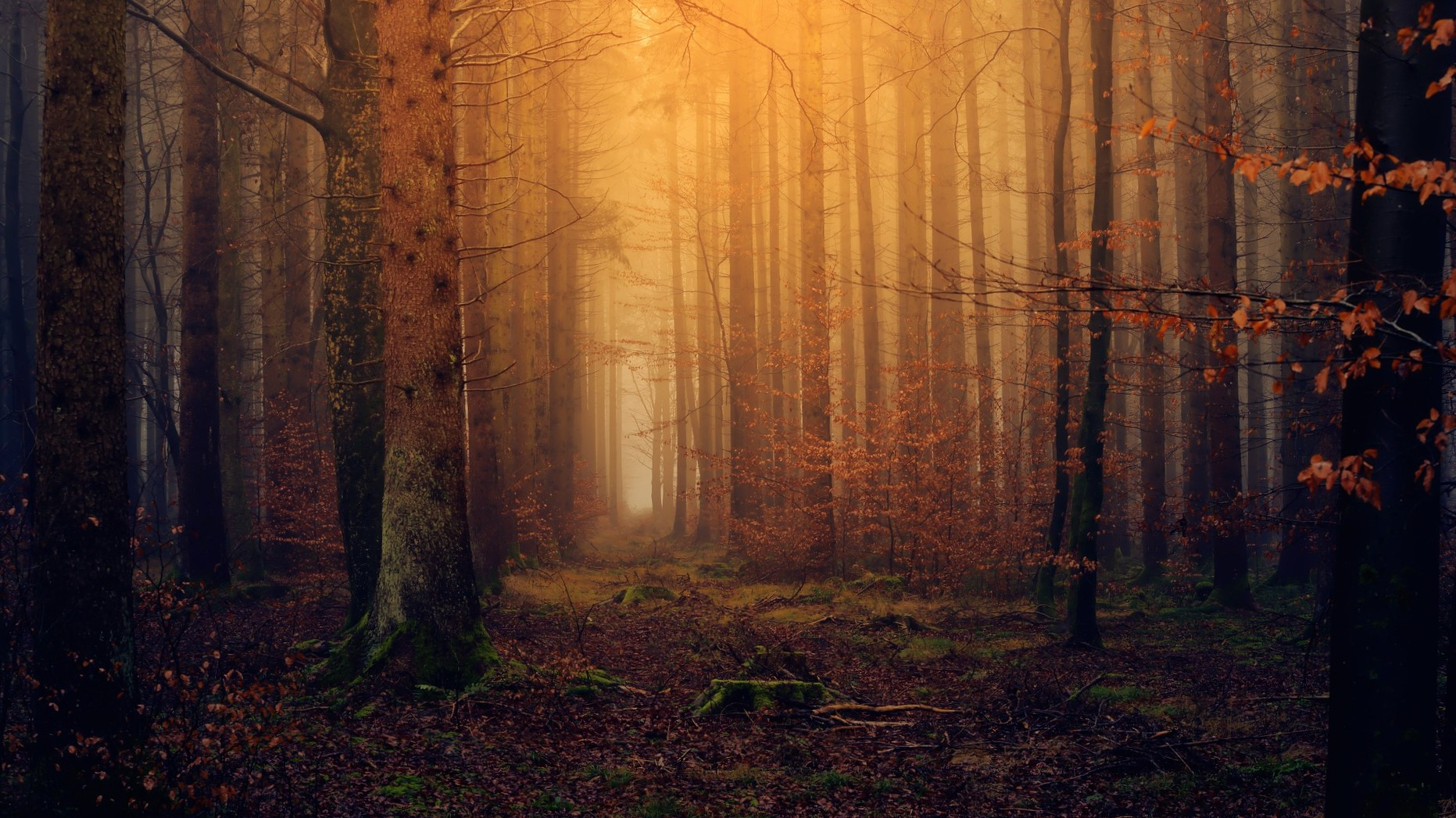 forest-3119826_1920 edit.jpg