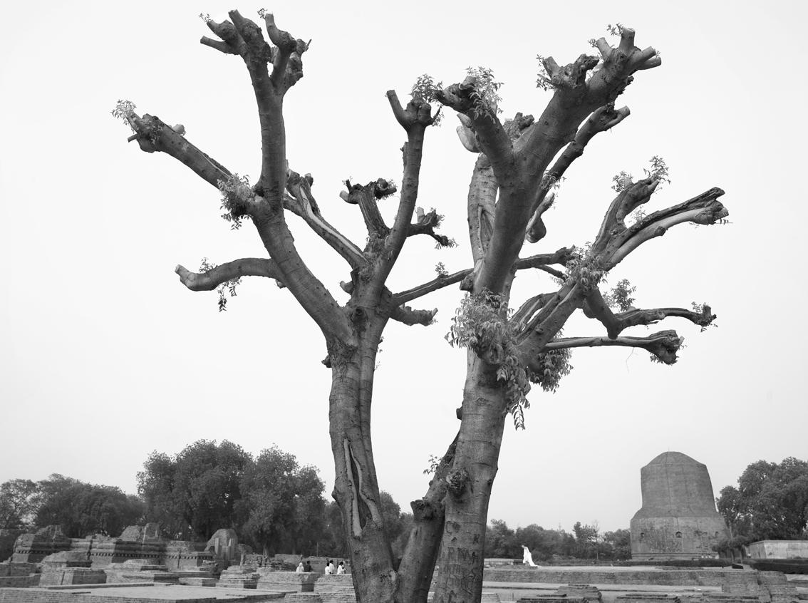 Sarnath No. 2