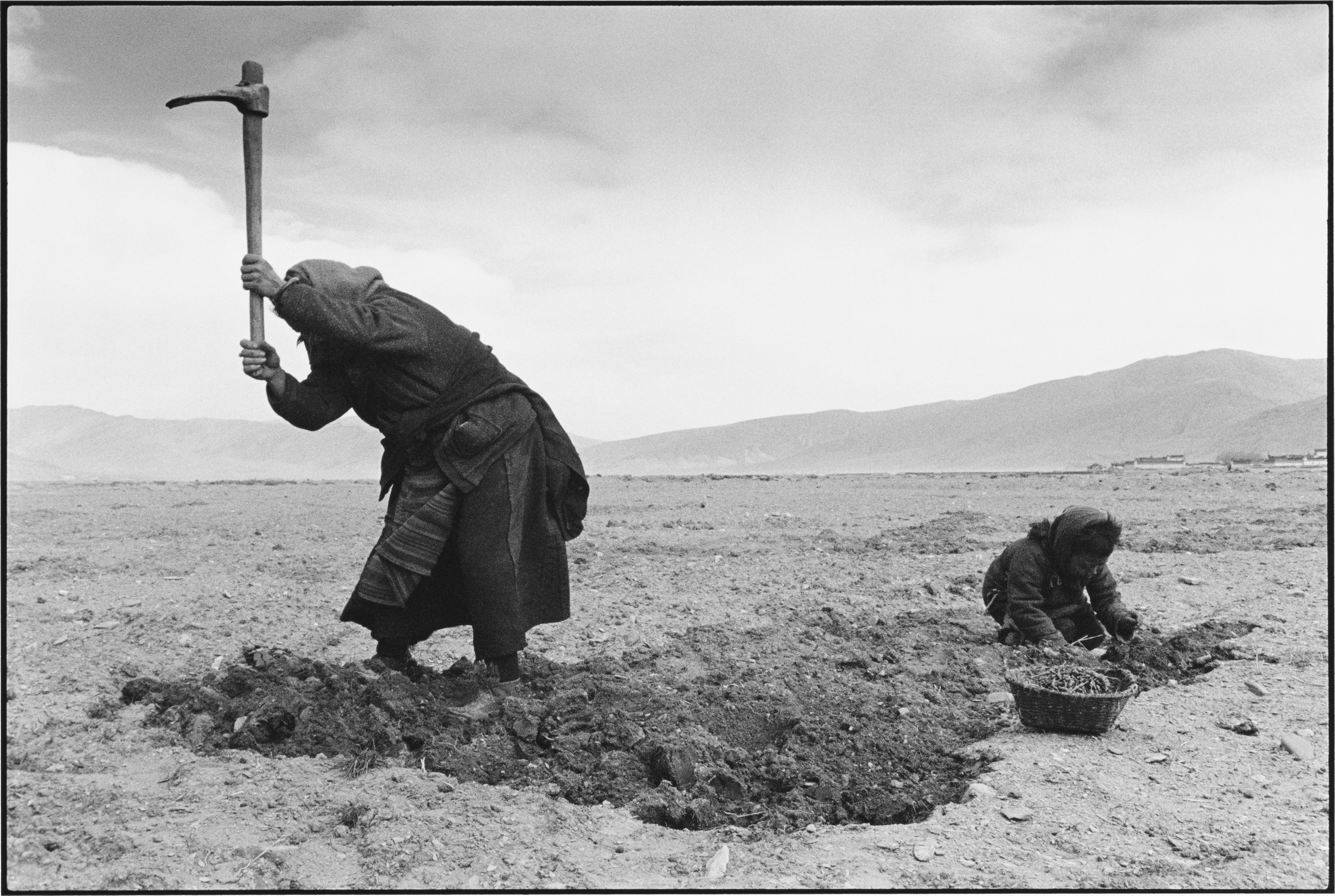 A Mother and Son Dig for Edible Plants, Tibet
