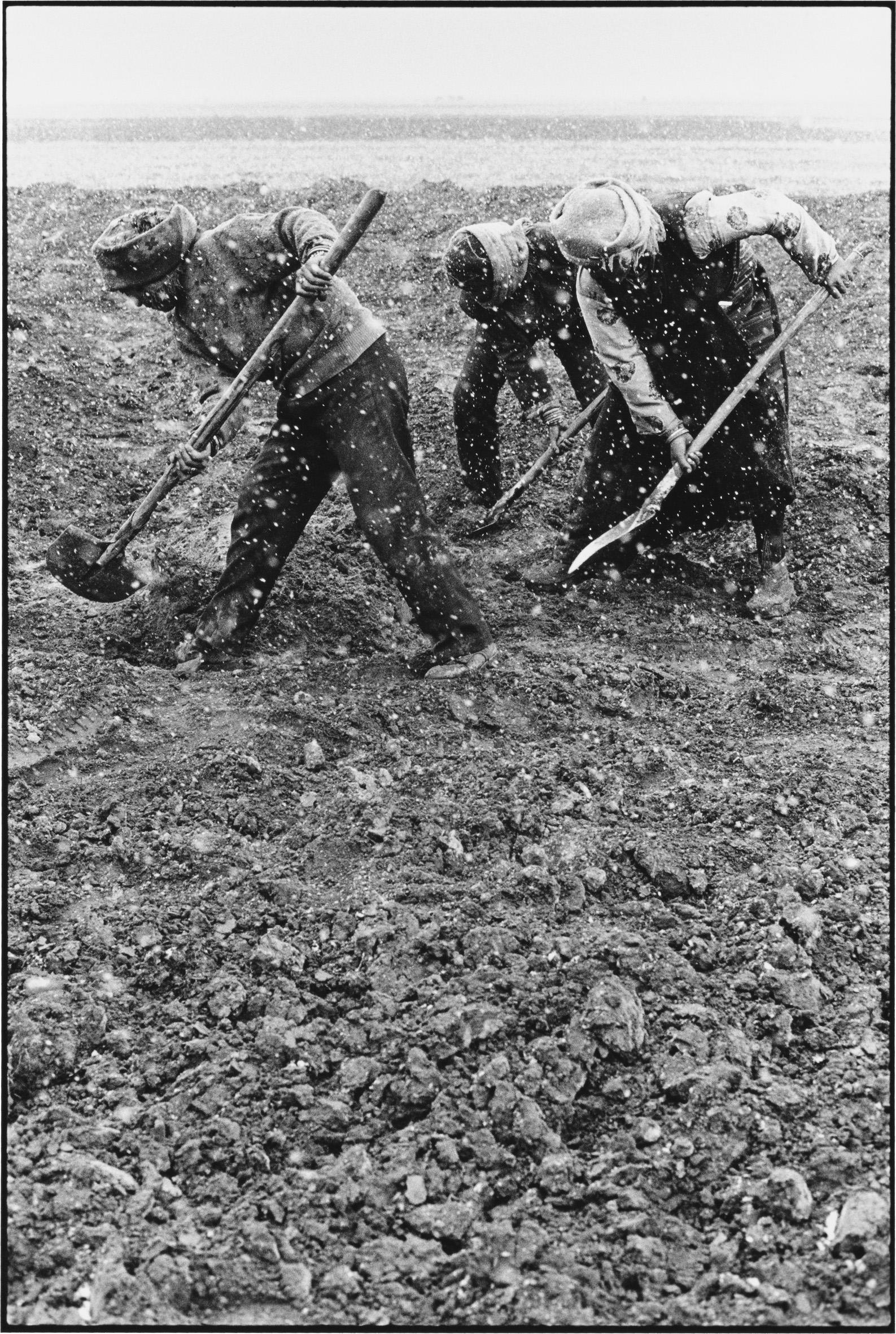 Three Women Fertilizing the Fields, Tibet