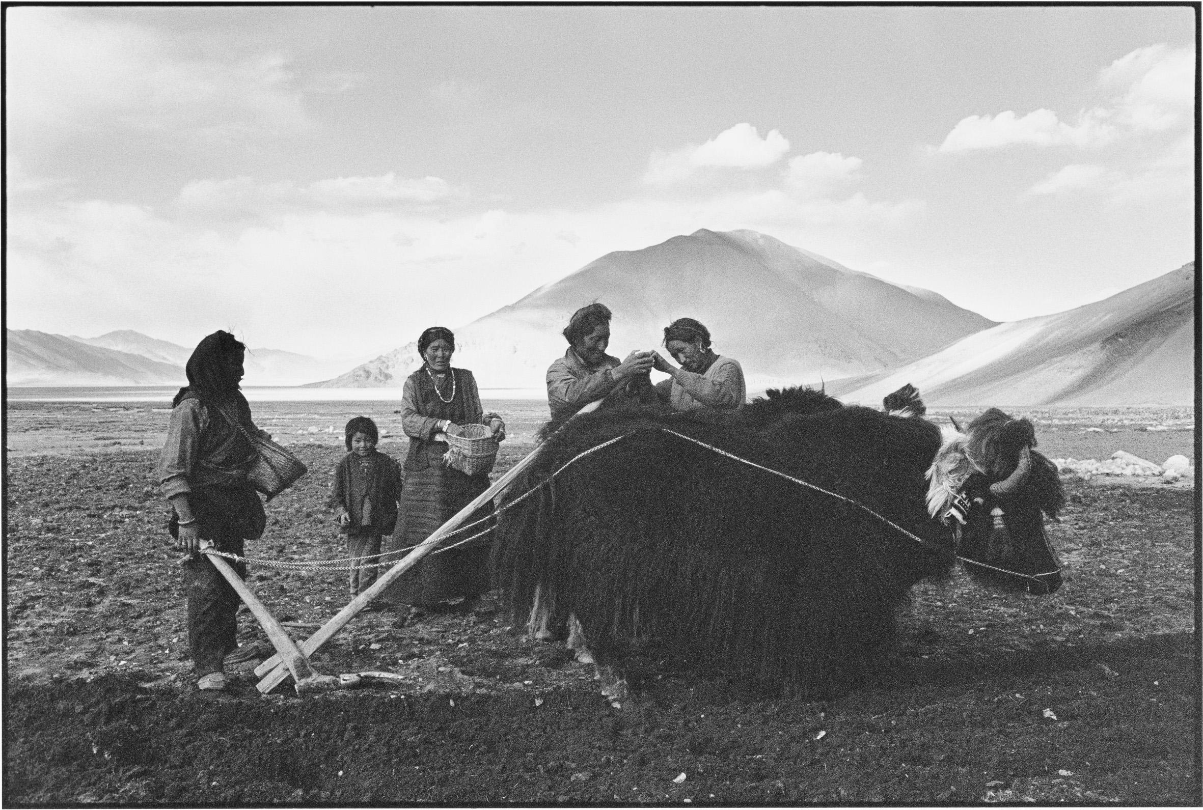 Mending the Plough, Tibet