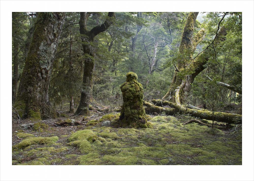 Rainforest Guardian