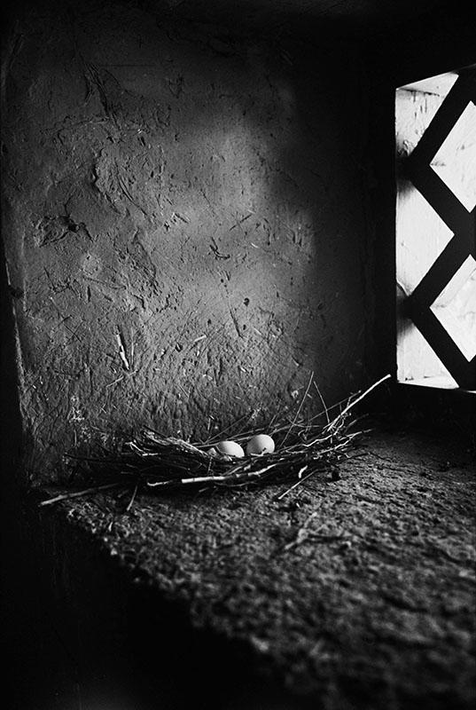 Wild pigeon eggs on the temple windowsill, Tibet