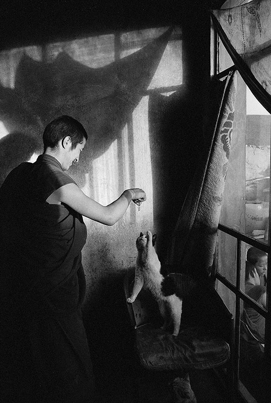 A monk playing with a cat, Qinghai