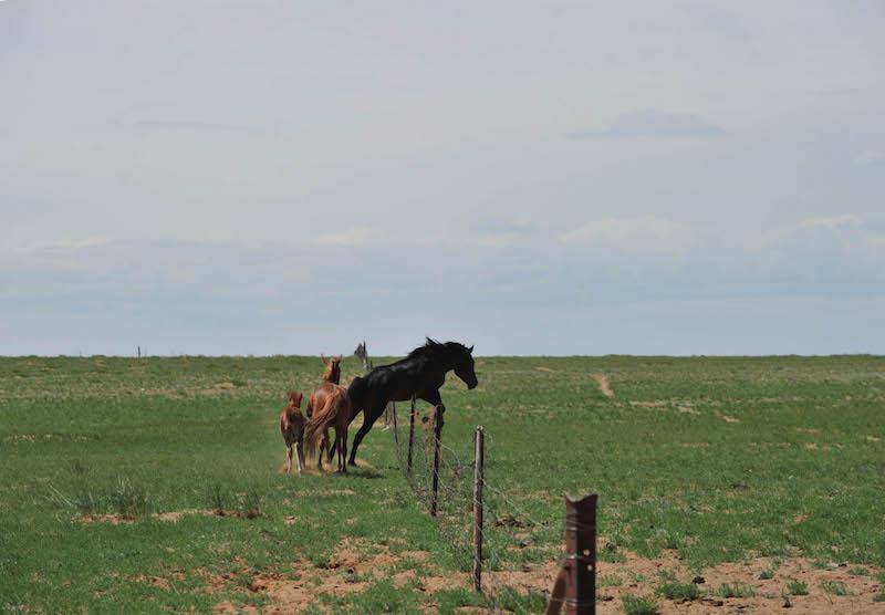 Na Risong (Mongolian) - Nomadism, Settlement and Fences
