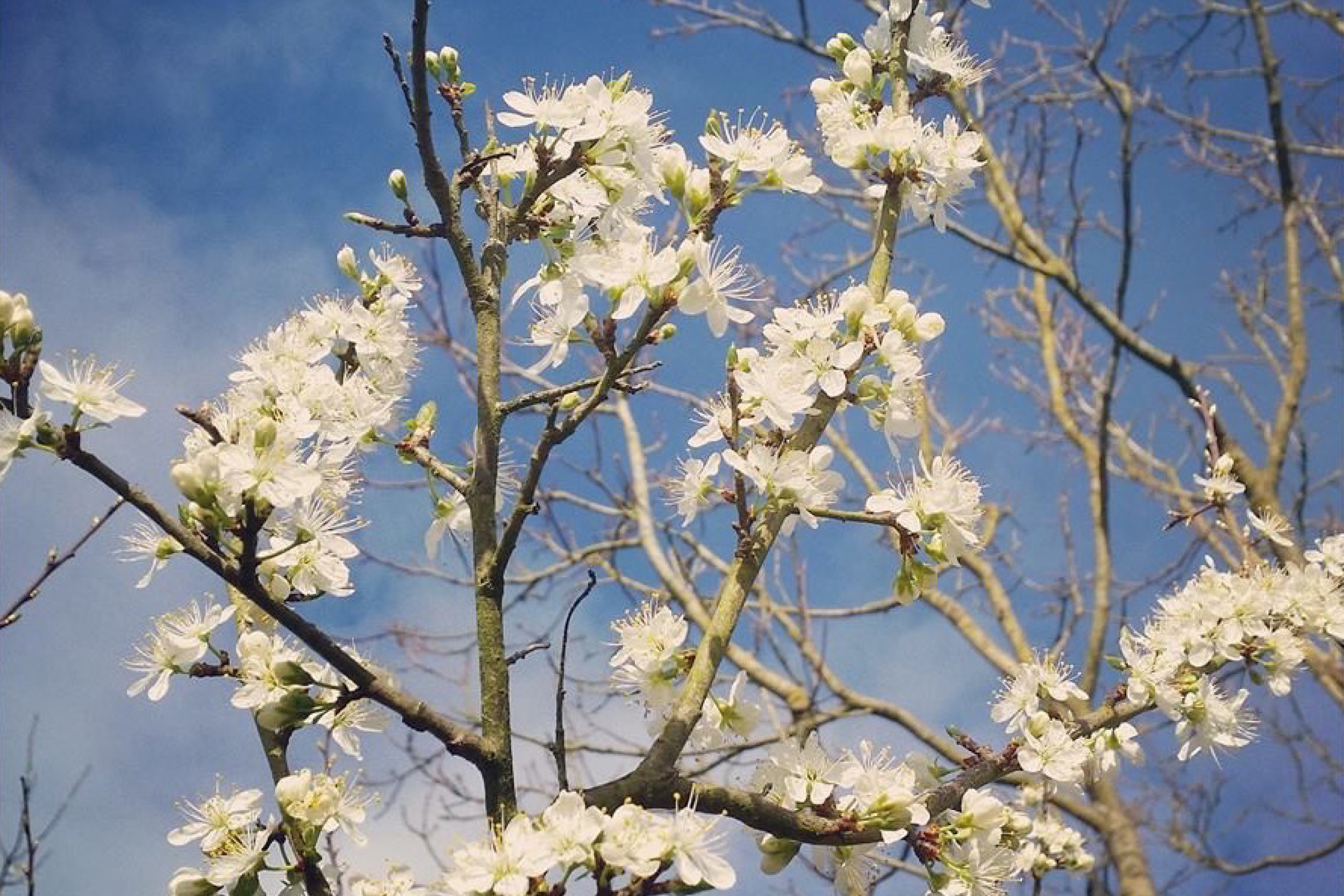 cover page sloe plant against sky.jpg