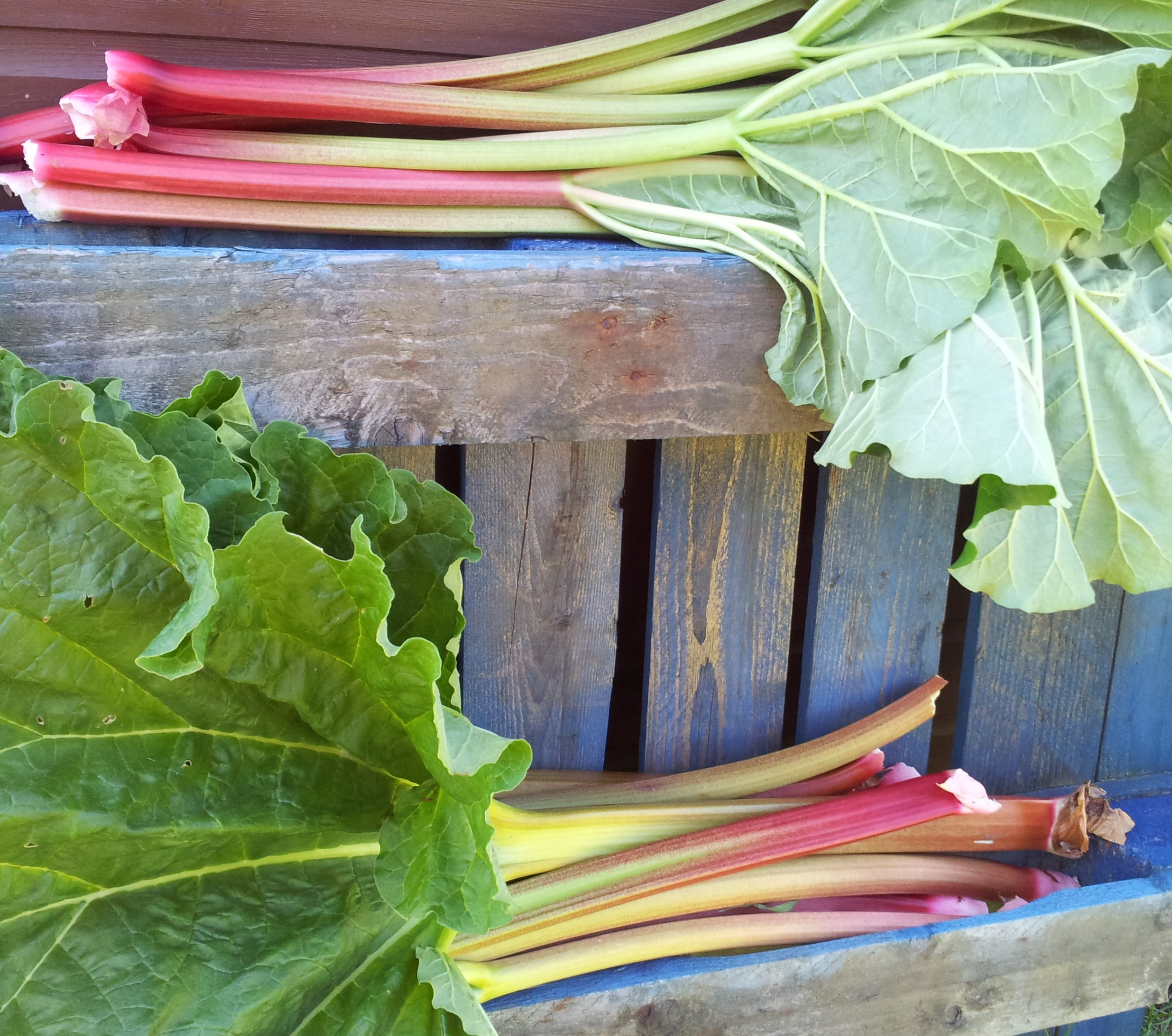 rhubarbsmaller.jpg