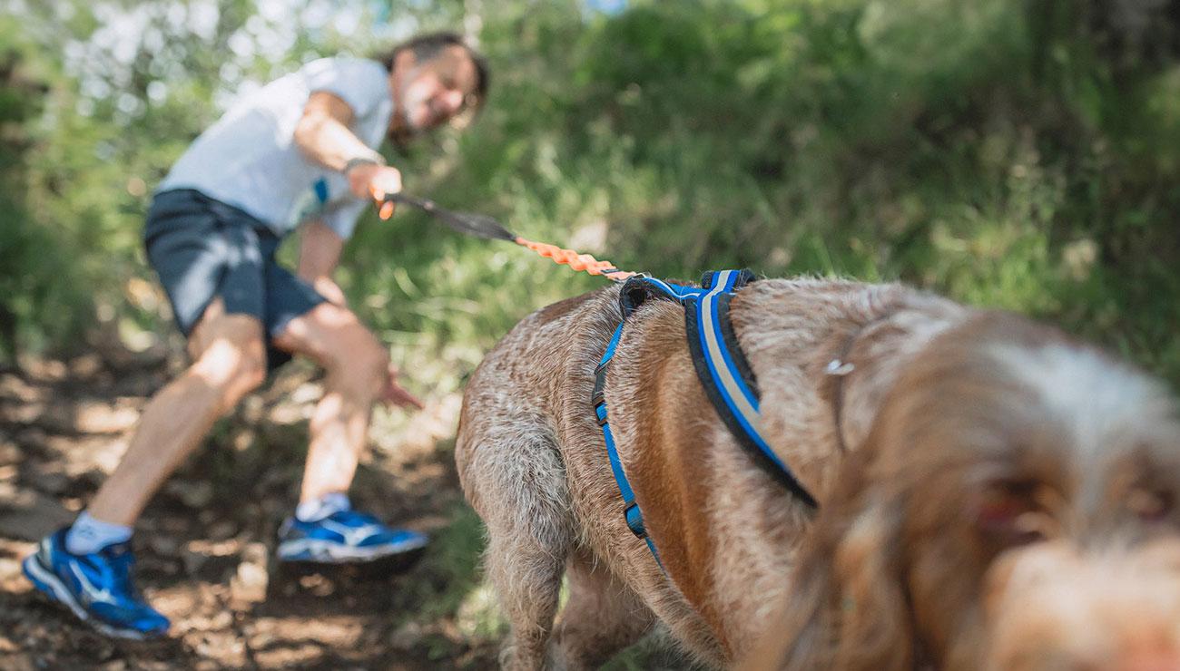 dog-races-1.jpg