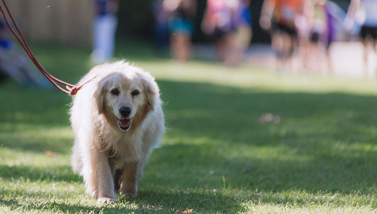 dog-races-2.jpg