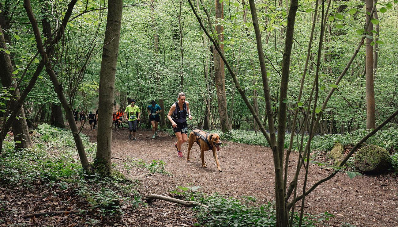 dog-races-4.jpg