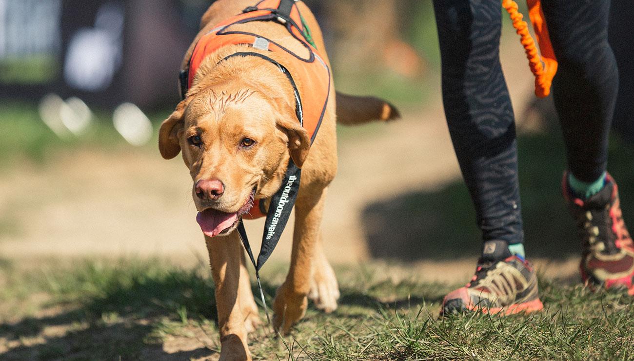 dog-races-5.jpg