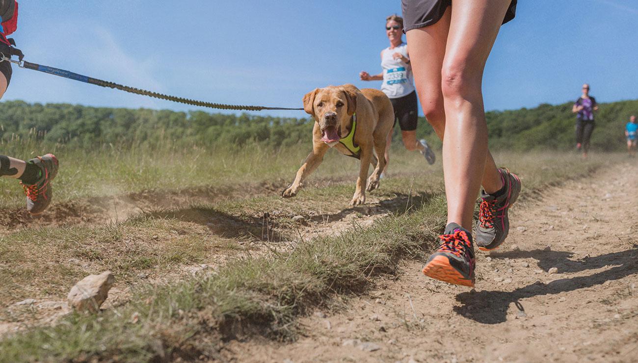 dog-races-15.jpg