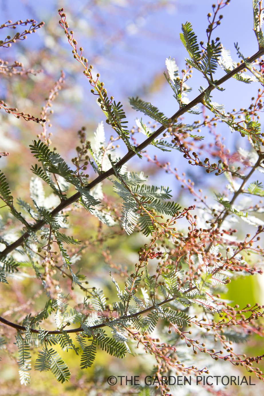 Plant Portrait c23  copy.jpg