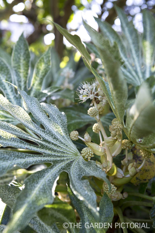 Plant Portrait c25  copy.jpg