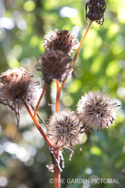 Plant Portrait g62  copy.jpg