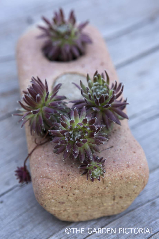 Succulent in brick a2  copy.jpg