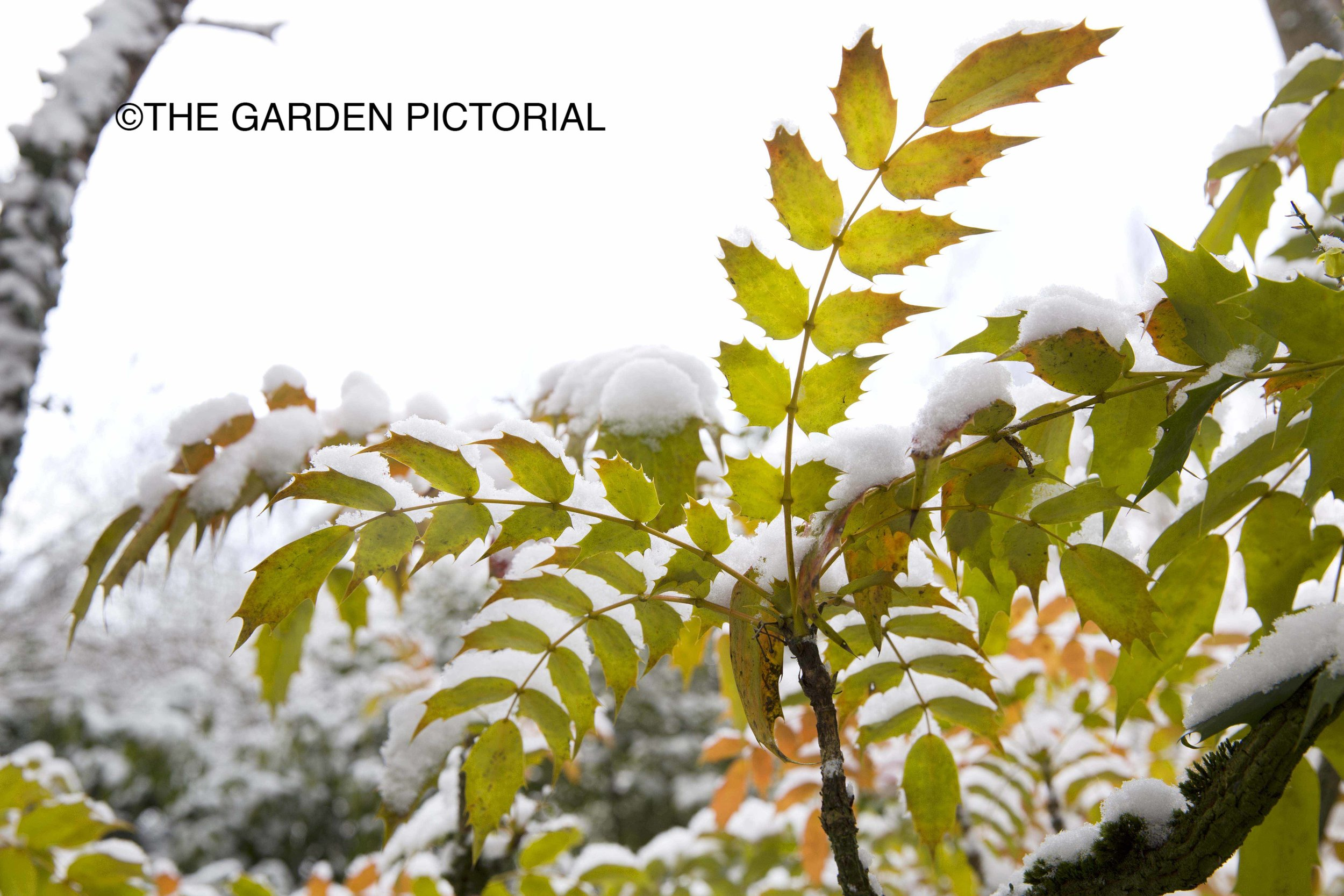 Gibberd_Plant_b12.jpg