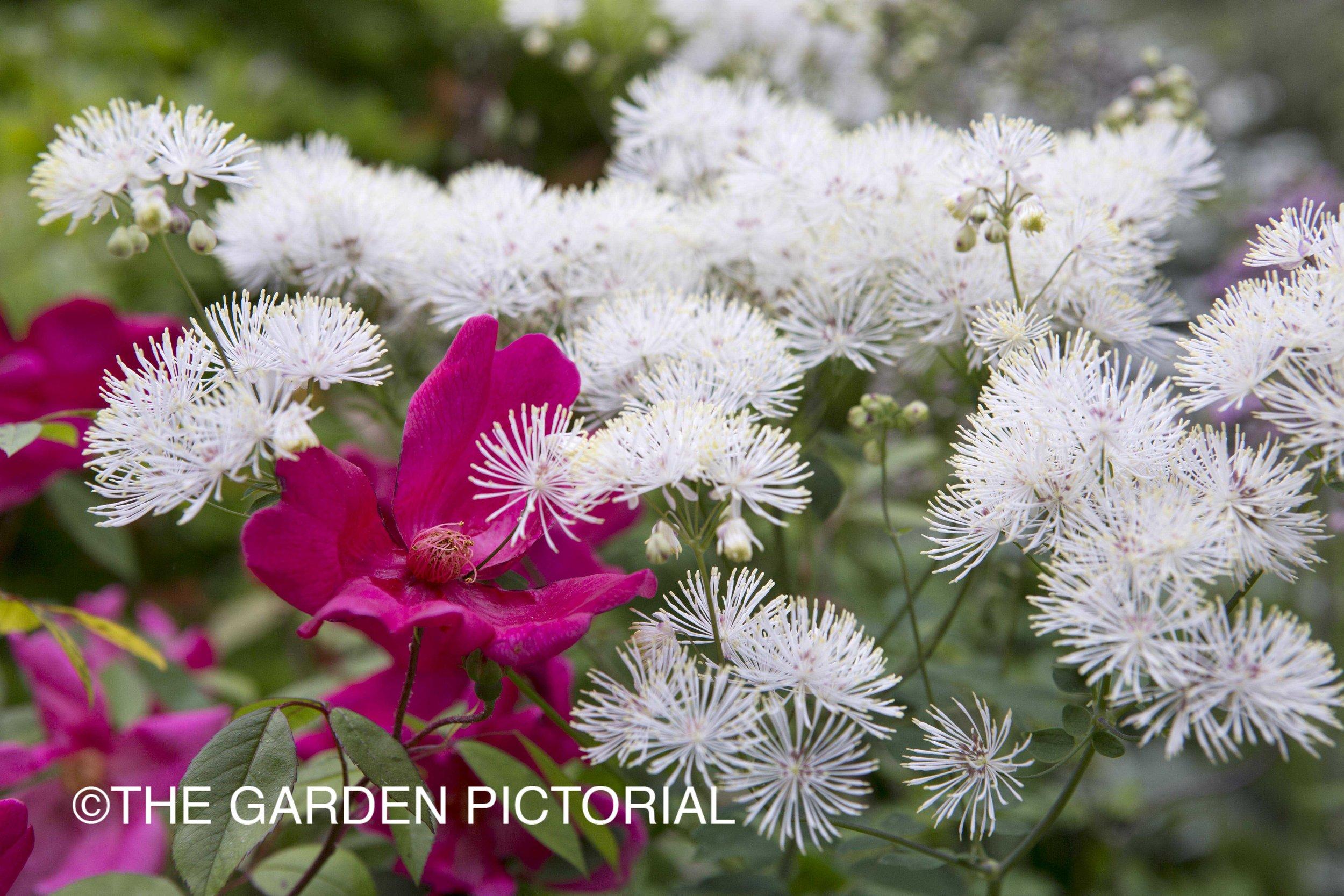 PlantPortrait_a3 copy.jpg