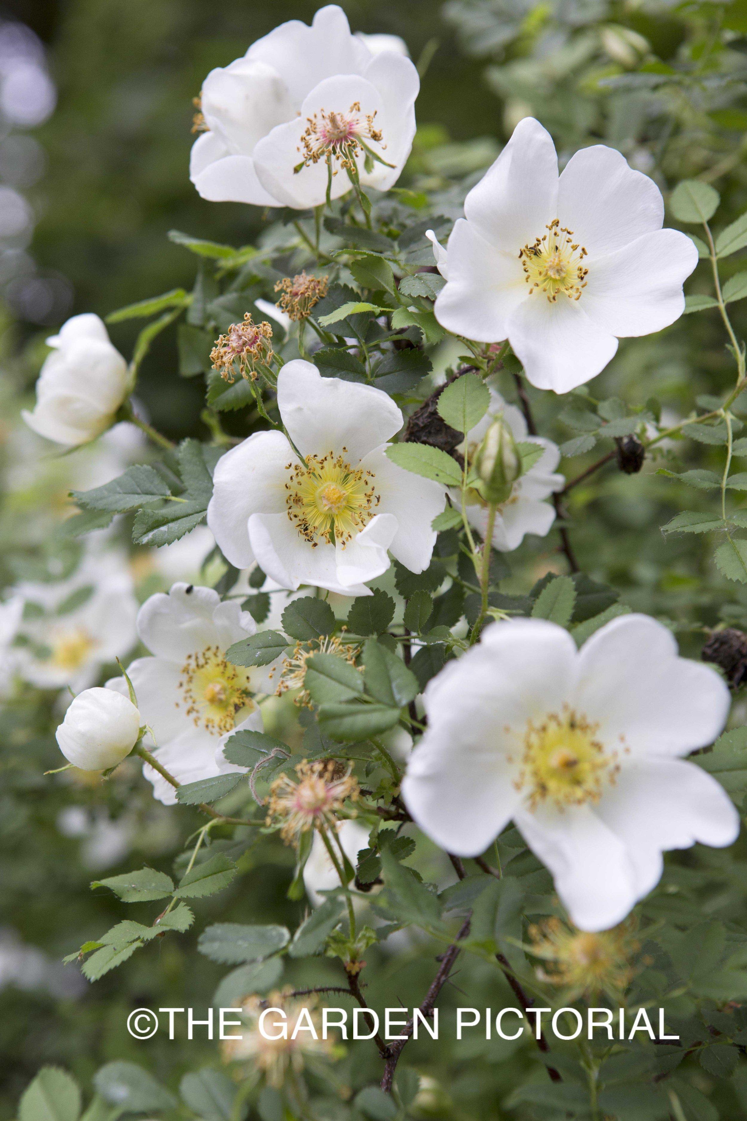PlantPortrait_b14 copy.jpg