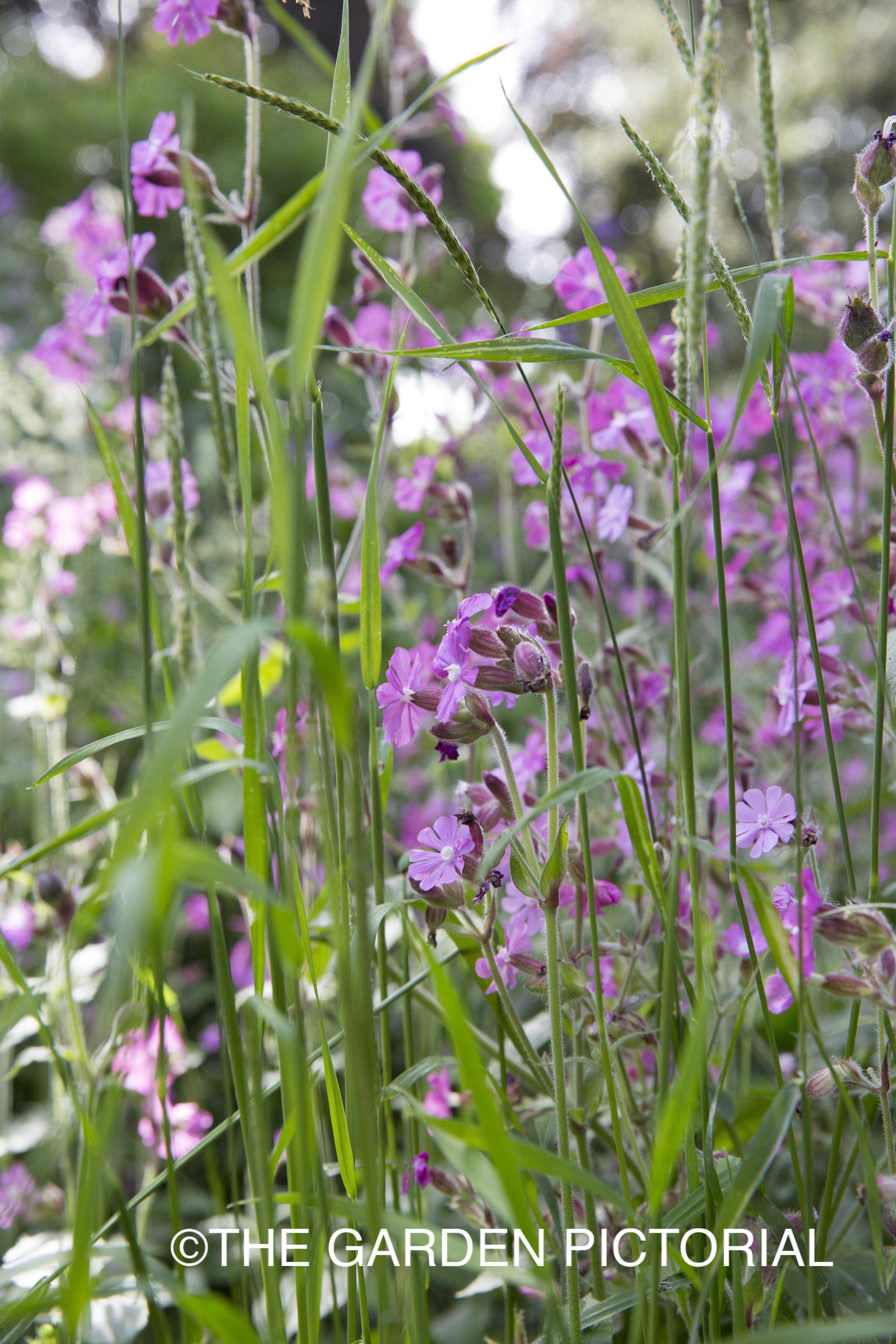 PlantPortrait_c22 copy.jpg