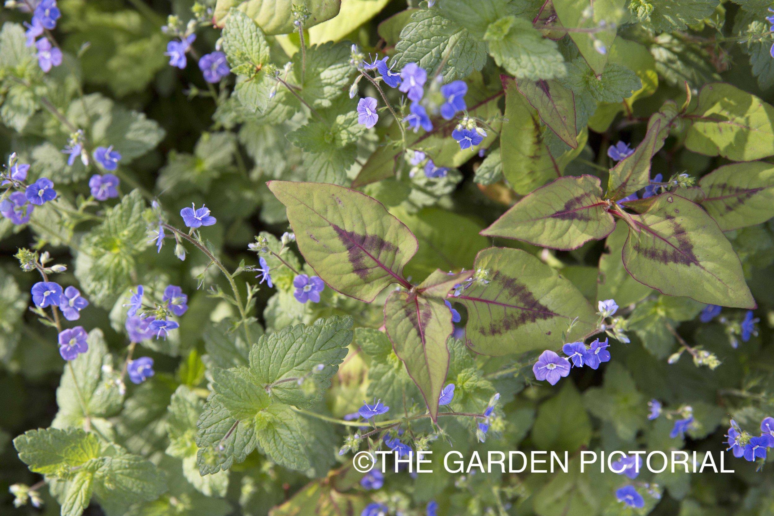 PlantPortrait_c27 copy.jpg