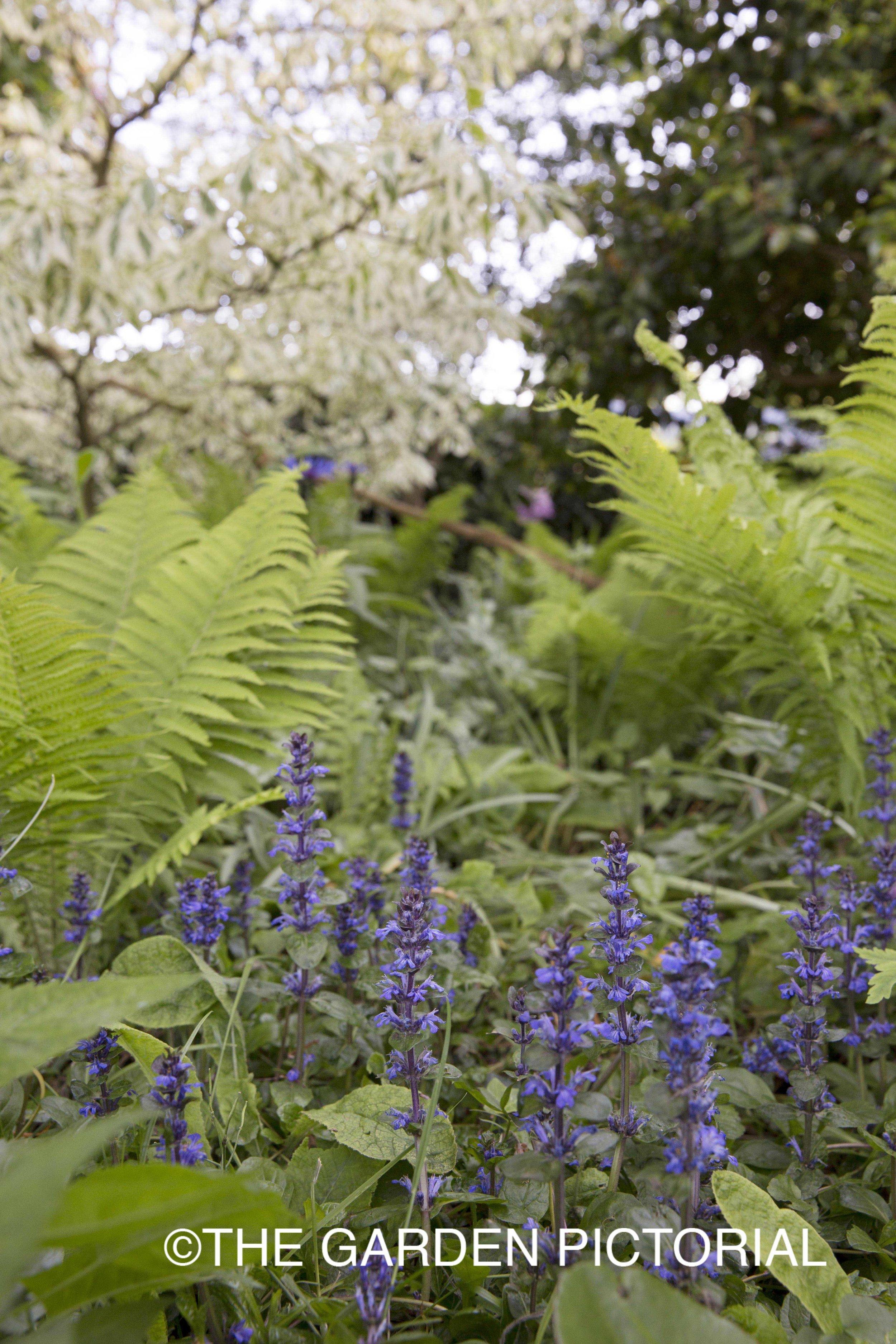 PlantPortrait_d32 copy.jpg