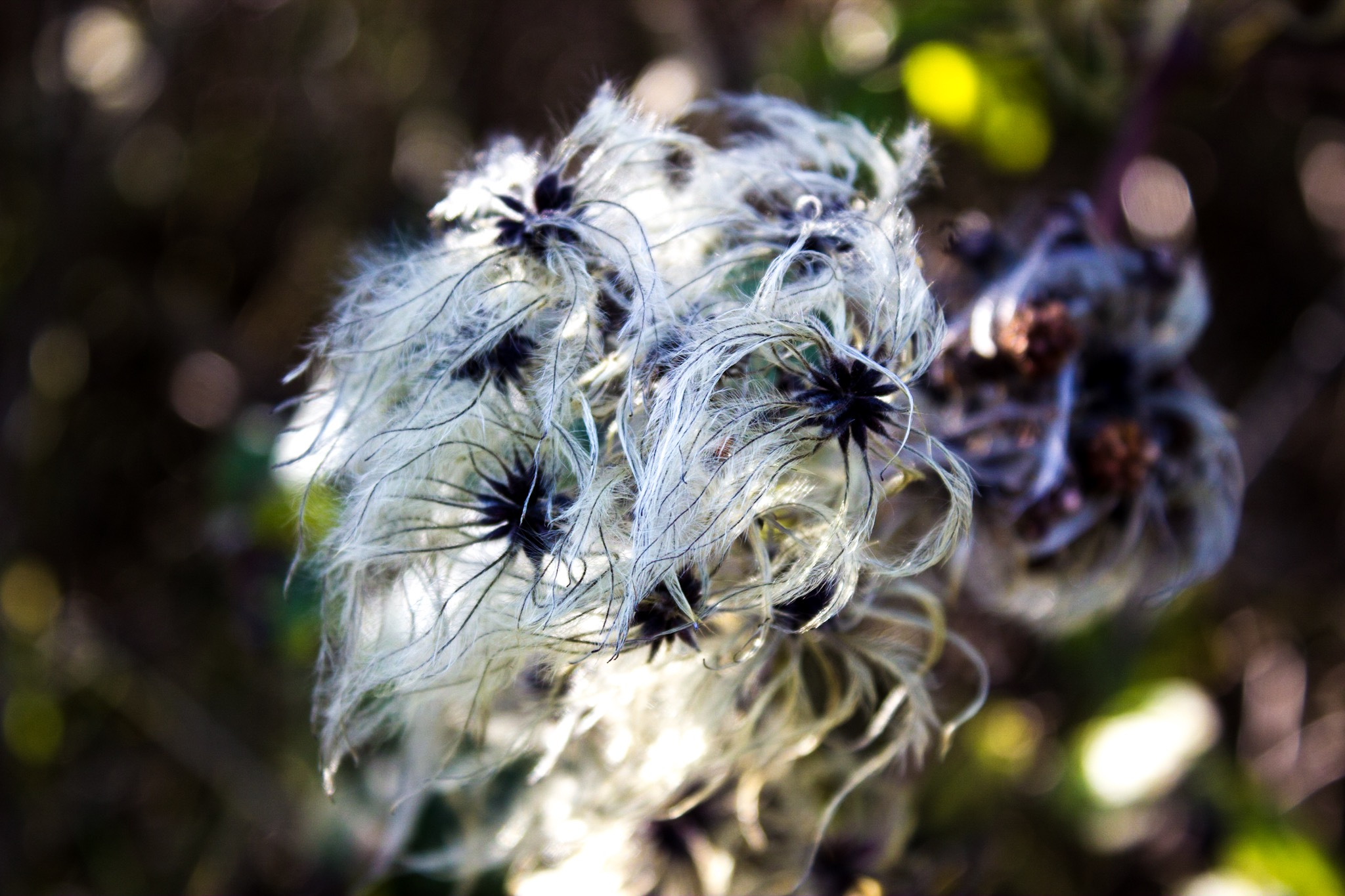 Seed heads in the autumn sunshine...